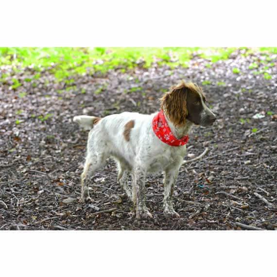 Red Paw & Bone Print Reflective Dog Scarf – Dog Bandanas