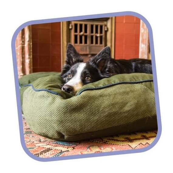 Dog Bedding Mattress Chew Proof Bed Paws Plus One
