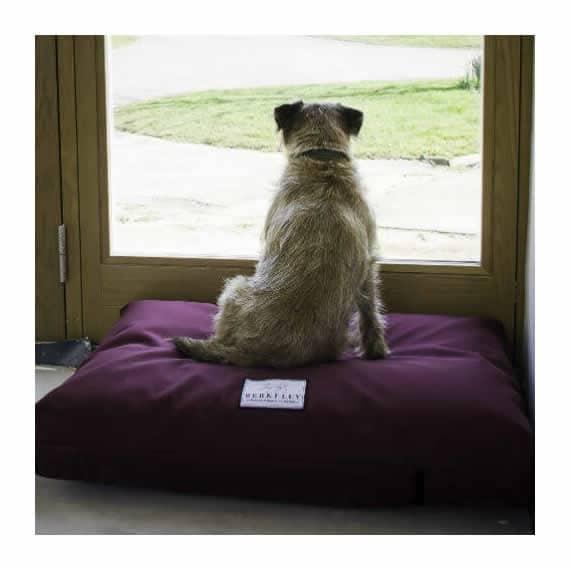 Orthopedic, Waterproof Dog Bed