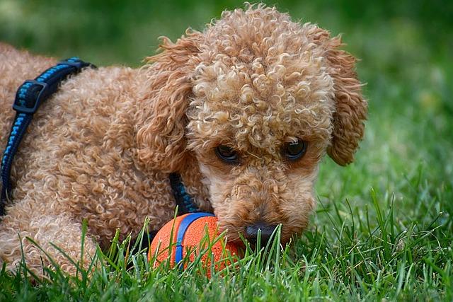 dog toy training