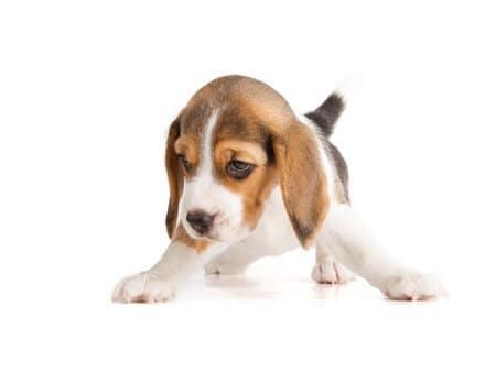 start puppy training