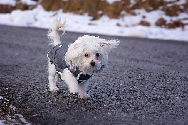choosing correct dog coat