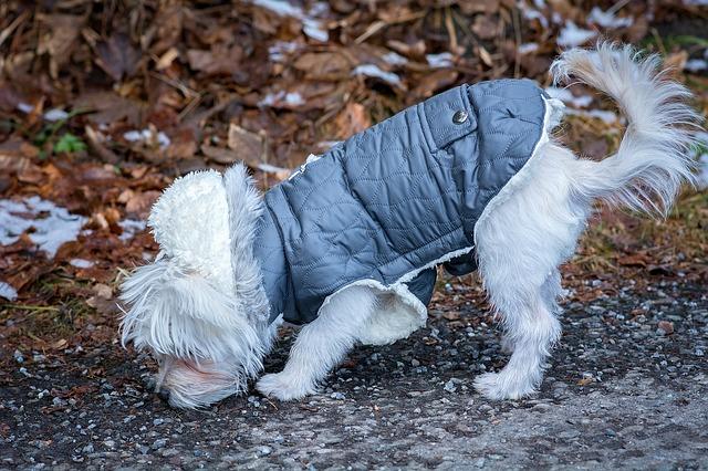 choosing the right dog coat