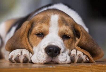 Choosing the right bed and bedding for your dog