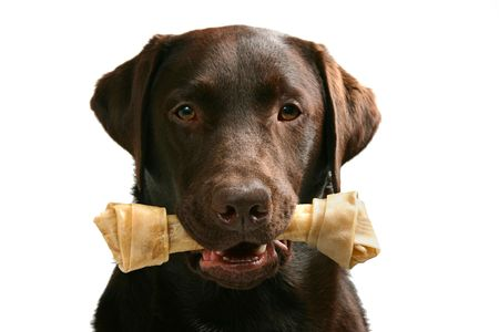 Labrador Types How to look after Labrador Puppy