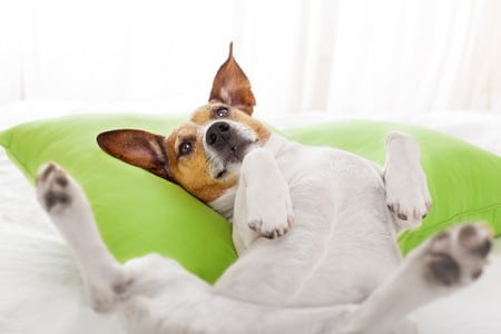 What is the best dog bed