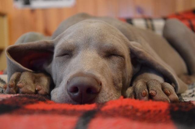 choosing correct dog bedding