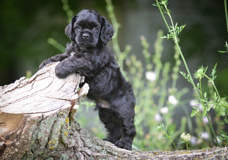 hOW TO CHOOSE A PUPPY BREED