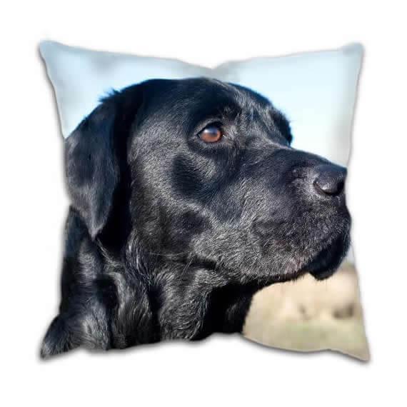 Gun Dog Cushion With Labrador