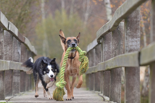 best active dog toys