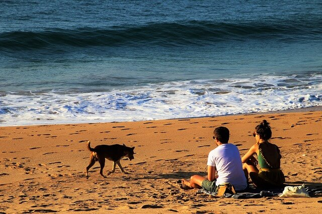 dog friendly holiday parks