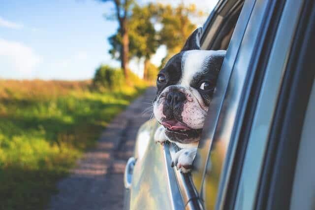 tops tips dog car