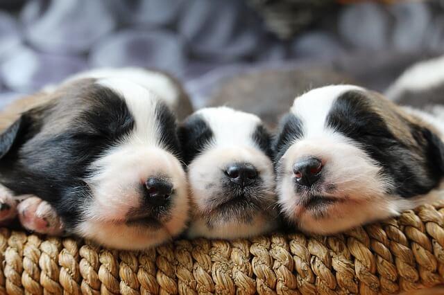 sleeping puppy crate training